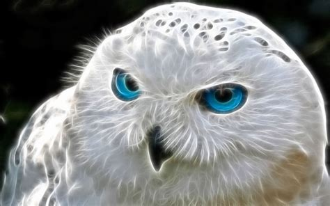 Background Owl Wallpapers by 707 Owl Hd Wallpapers Background Images Wallpaper Abyss