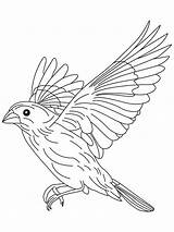Coloring Pages Canary Flight Bird Flying Drawing Grosbeak Birds Printable Getdrawings Finch Sparrow Colors Recommended sketch template