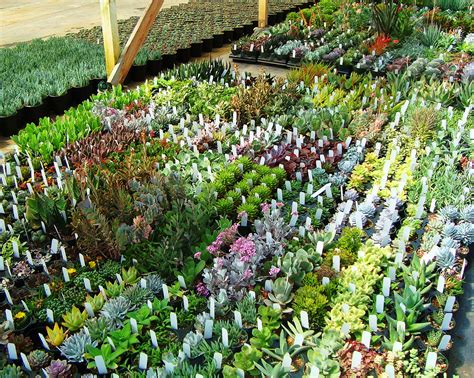 suculent garden supporting local businesses succulent gardens local nomad