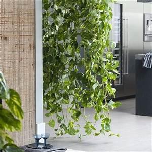 Plante Intérieur Grimpante : plante interieure tombante ~ Louise-bijoux.com Idées de Décoration