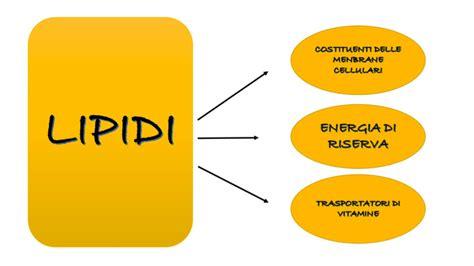 alimenti con lipidi grassi e lipidi alimenti e benefici