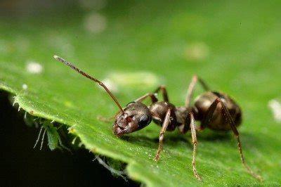 home remedy  kill ants      rid  ants