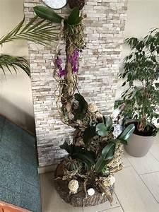 Orchideen Umtopfen Video : orchideen idee orchideen orchideen garten und ~ Watch28wear.com Haus und Dekorationen