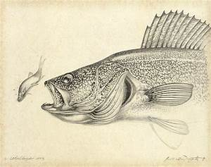 Walleye Pencil Study Painting by JQ Licensing