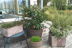 Comment Planter Un Camélia : comment planter mon cam lia ~ Melissatoandfro.com Idées de Décoration
