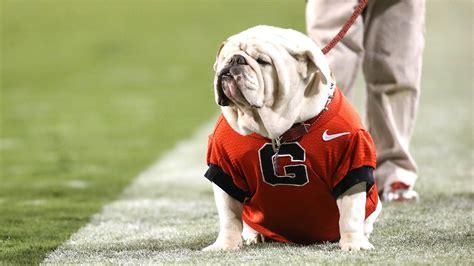 Former Georgia Bulldogs English Bulldog Mascot Uga Ix Dies