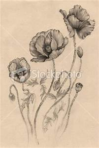 Poppy on Pinterest | Poppies Tattoo, Red Poppies and ...