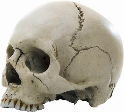 Skull Aesthetic Transparent Human Clip Purepng