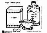 Sugar Maple Coloring Syrup Pages Printable Designlooter Edupics Hidden sketch template