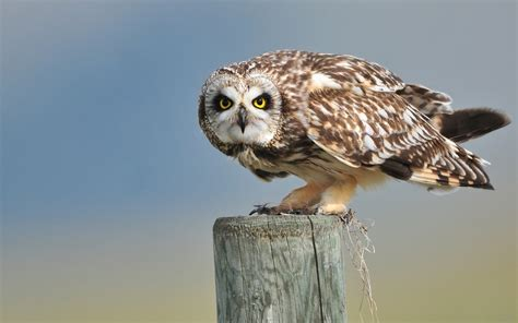 einheimische vögel bilder die 80 besten eulen hintergrundbilder
