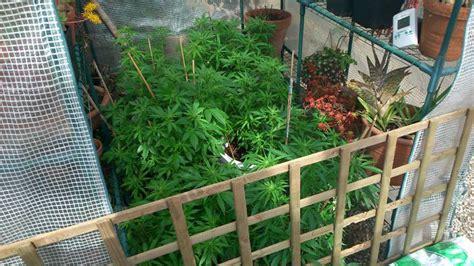 culture de cannabis en ext 233 rieur hors saison du