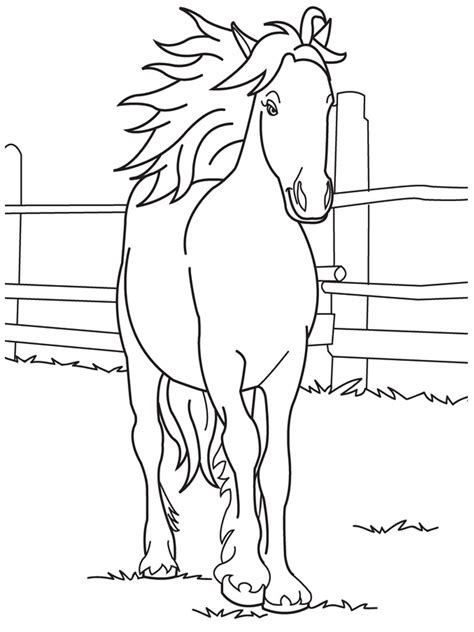 cute baby horse coloring pages  printable