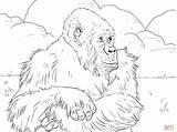 Gorilla Coloring Mountain Coloriage Gorille Printable Cartoon Cliparts Colorare Coloriages Imprimer Pianura Ape Gorillas Template Range Animals Sketch Disegni Montagnes sketch template