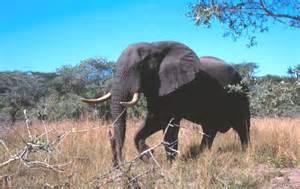 Savanna Grassland Biome Animals