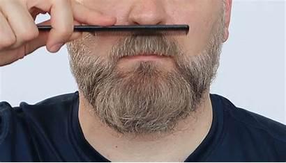 Beard Oil Apply Grooming Moin Bestimmt Macht