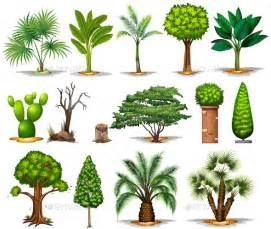 different types of trees by blueringmedia graphicriver