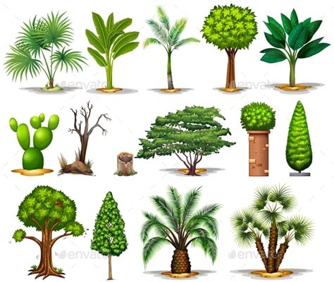 different types of plants different types of trees by blueringmedia graphicriver