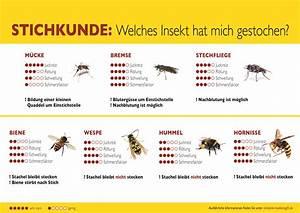 Schwarze Wespe Deutschland : die gef hrlichsten insekten f r insektengiftallergiker ~ Whattoseeinmadrid.com Haus und Dekorationen