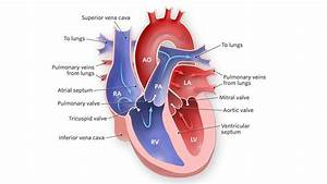 The Picture Of Heart