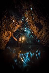 U00bb A Bugs U2019 Universe  U2013 Glowworms Light Up Cave Like Stars
