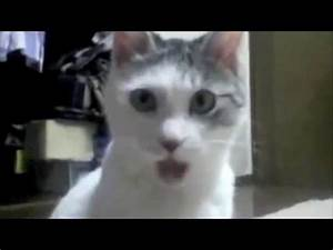 OMG Cat: Video Gallery | Know Your Meme