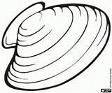 Mussel Muschel Freshwater Coloring Colorear Mossel Colorir Zum Ausmalbilder Animales Kleurplaten Ausdrucken Pond Malvorlage Dibujos Animais Desenhos Kleurplaat Zoetwater Vijver sketch template