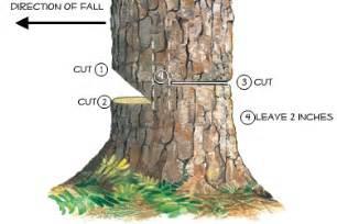 tree services rpr trees