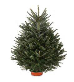 fresh cut fraser tabletop fir tree with stand 36 quot h holiday greenery