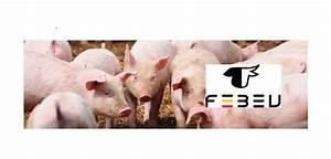 """Pigmeat export """"understanding"""" agreed between Belgium and ..."""