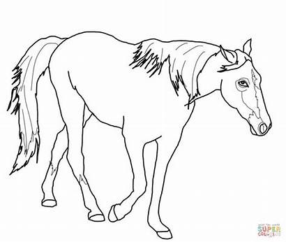 Horse Coloring Pages Quarter Printable Tennessee Walking
