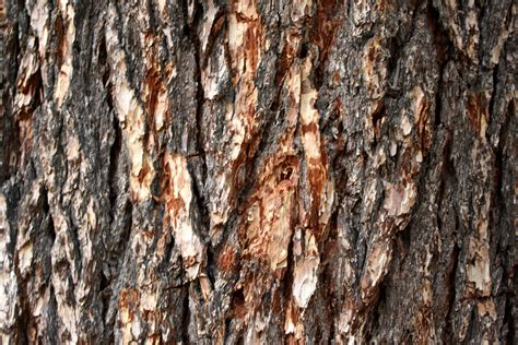 bark of tree pine tree bark texture picture free photograph photos public domain