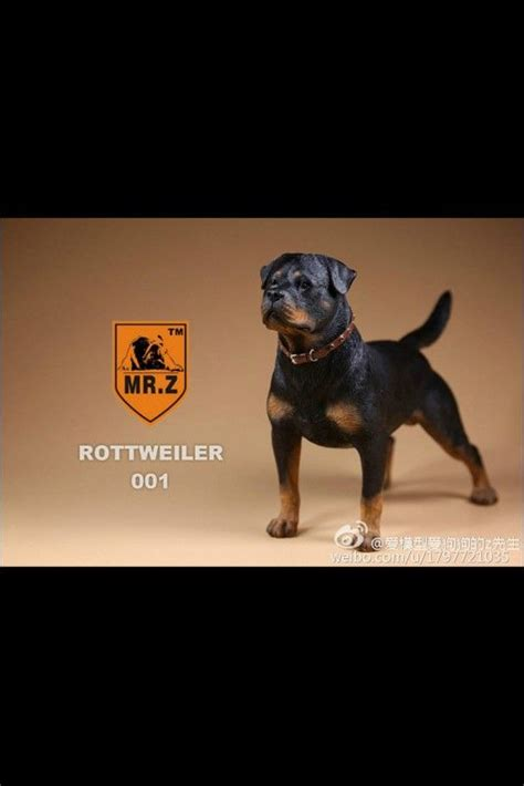 17 best ideas about german rottweiler on