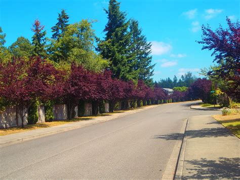 accent trees accent tree service landscaping llc coupons in lake tapps wa 98391 valpak