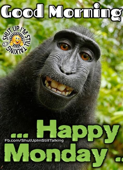 monkey good morning happy monday pictures