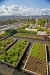 Our Rooftop Garden – Noble Rot rooftop garden