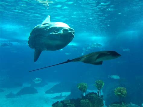 aquarium geant a visiter 28 images plongeon dans les aquariums de la cit 233 de la mer