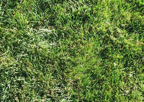 fescue sod top 28 fescue bluegrass mix turfgrass recommendations piedmont home lawns high colors of