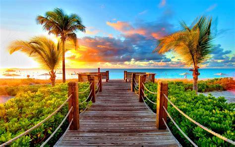 Desktop Backgrounds by Palm Sea Port Plants Wallpaper 4018 Wallpapers13