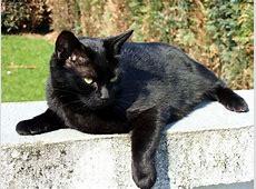 Luna, Katze, schwarze Katze katzen Katzen und Schwarz
