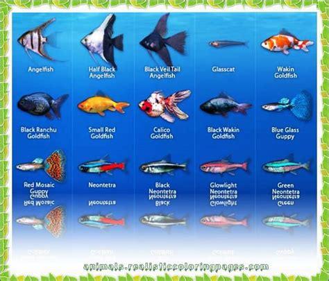 list  freshwater fish based  alphabet