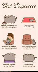 how to get a cat to like you cat humor cat etiquette