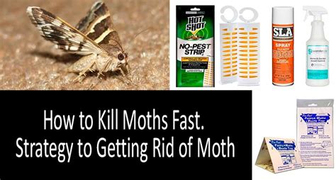 rid  moths  traps sprays repellents