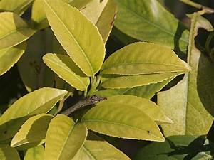 Stickstoffmangel Bei Pflanzen : neudorff ch n hrstoffbedarf ~ Lizthompson.info Haus und Dekorationen