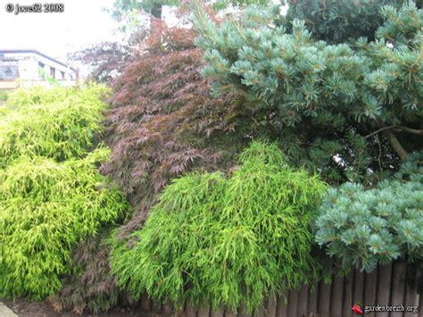 jardineries le mont noir belgique les galeries photo de plantes de gardenbreizh