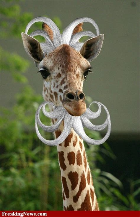 Giraffe Spider Meme - best 25 funny giraffe pictures ideas on pinterest pictures of spiders funny meme pictures