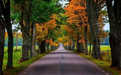 Trees Road Tree Lined Autumn Leaves Forest