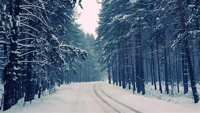 Forest Winter Desktop Snowy