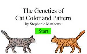 create a cat create a cat by mistyblue2010 on deviantart