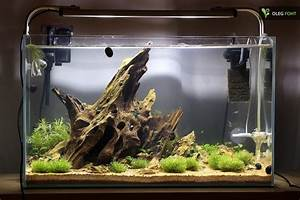 Aquarium Einrichten 60l : biconeo aquascaping neues 60l becken aquascaping ~ Michelbontemps.com Haus und Dekorationen