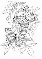 Coloring Pages Butterfly Printable sketch template
